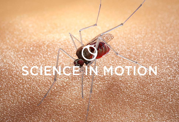Random42 Science in motion Malaria